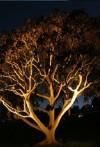 Up Lighting or Tree Lighting